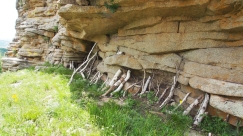 To prevent the ancient rocks from tumbling they have to be stabilized by wooden branches.