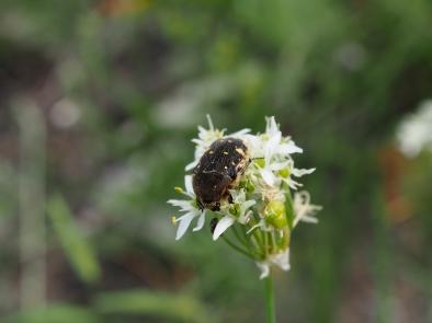 A Bug.